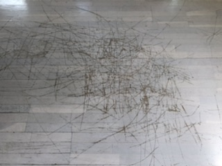 Charlotte's Woody Web aka Scratches ugly floor contest entry photo